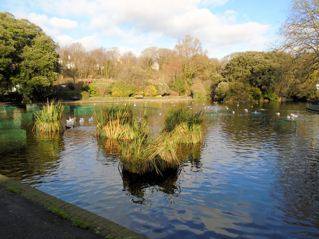 Queens Park Pond - Christmas Day 2018