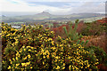 NZ5810 : When the gorse is out of bloom, kissing's out of fashion by Mick Garratt