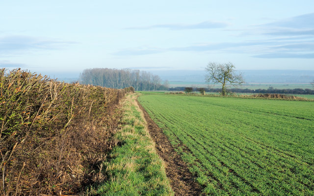 Flailed hedge alongside field