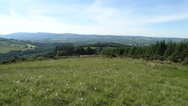 On southern slope of Monabrack, Galty Mountains