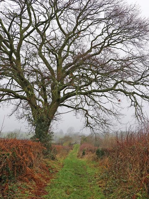 Farm track west of Castlecroft, Wolverhampton