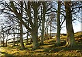 NT2364 : Trees at Castle Knowe by Alan O'Dowd