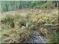SE0531 : Ogden Water: boggy patch in Skirden Clough by Stephen Craven