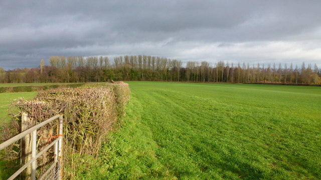 Hedge and pasture at Hendre