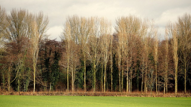 Edge of woodland at Hendre