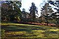 SU2411 : Low sunlight in Ocknell Inclosure by David Martin