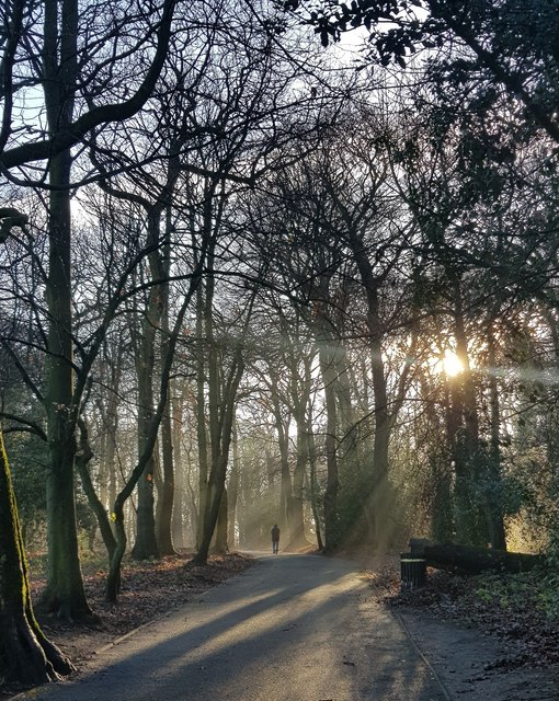 Christmas Eve in Woolton Woods