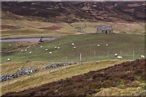 NO1485 : Newbigging, Glen Clunie by Alan Reid