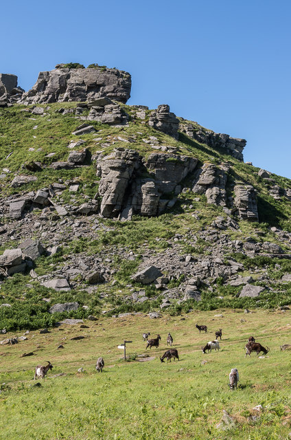 Feral goats, Valley of Rocks