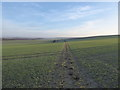 SU2884 : Bridleway at sunset, Knighton Down by Vieve Forward