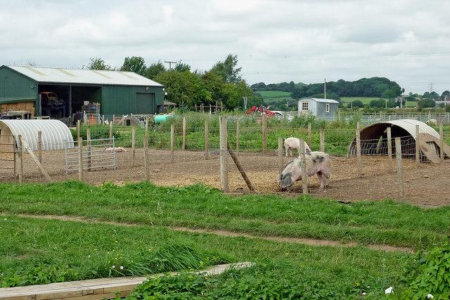 Pig enclosures near Bishton in Staffordshire