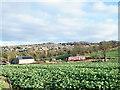 NZ1859 : Farmhouse at Hollinside beyond leafy crop by Trevor Littlewood