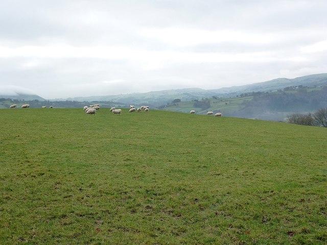 Pasture by Neuadd Hendidley Farm, Beehive Lane