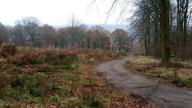 Edge of Ruardeanhill Plantation