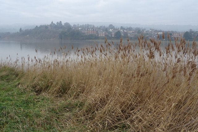 Reeds on the banks over the River Severn