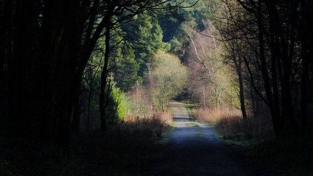Forest ride, Farley Moor near Matlock