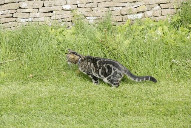 Cat in the churchyard 2