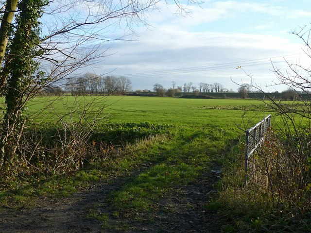 Field on Carlton Marsh