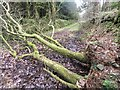 SS8390 : Track blocked by fallen tree by Alan Hughes