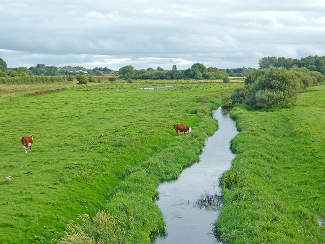 Grazing by the River Penk near Stafford