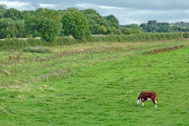 Radford Meadows near Stafford