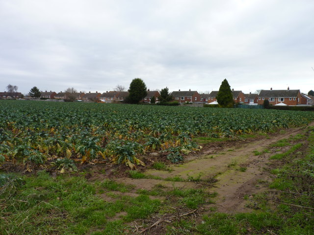Field of sprouts
