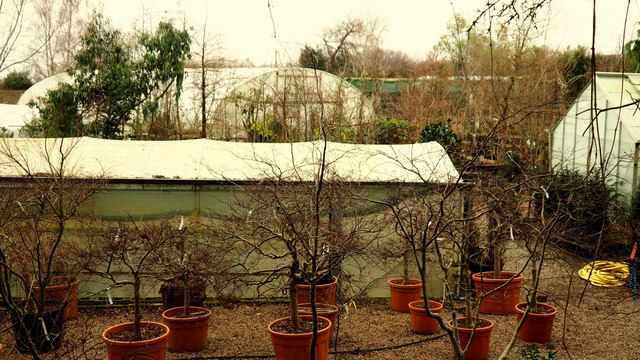 Howle Hill Nursery