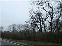 TQ4793 : Lambourne Road, Chigwell Row by David Howard