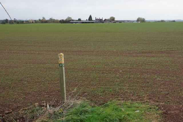 Footpaths crossing a field