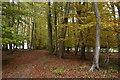 SU7189 : Footpath on the edge of Doyley Wood by Simon Mortimer