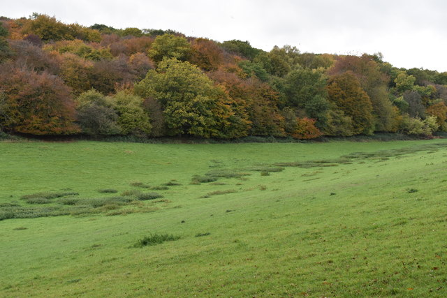 Woodland on the northern edge of Russell's Water Common