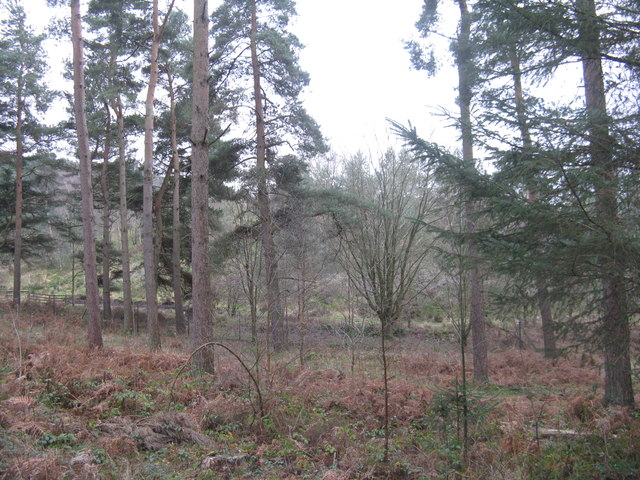 Woodland at Whinfell