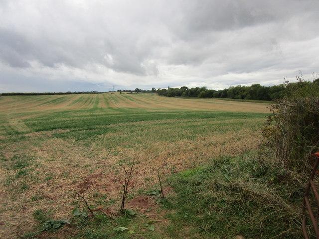 Stubble field near Knighton