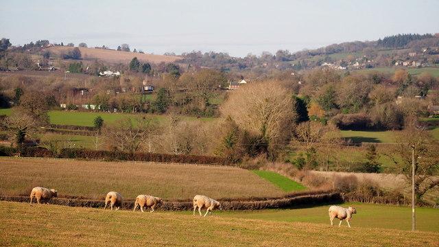 Sheep pasture at Elvastone