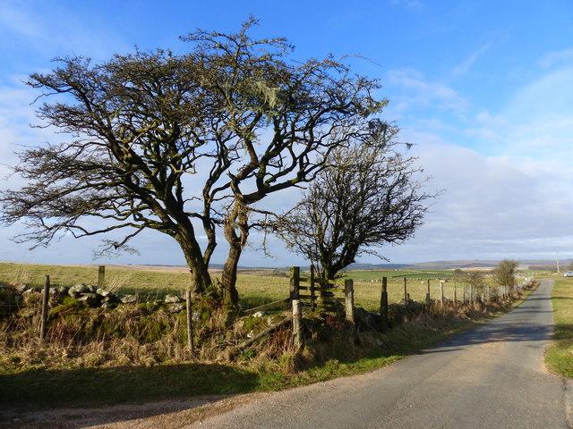 Winter trees and farm access road, near Hexworthy, Dartmoor