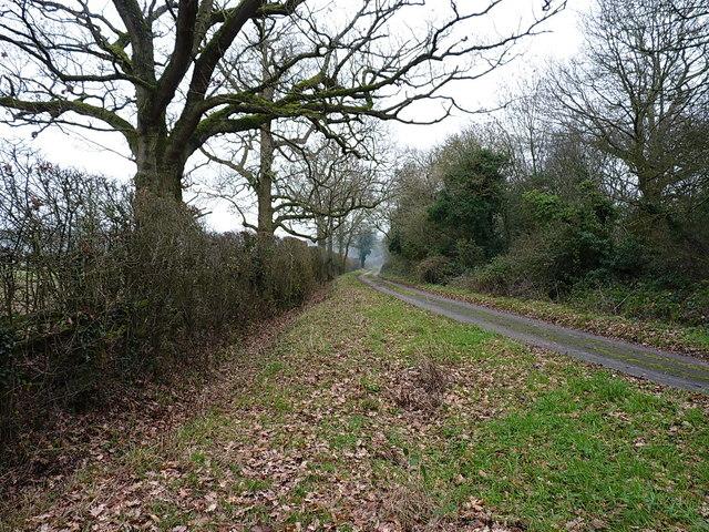 Roadside verge on Old Green Lane
