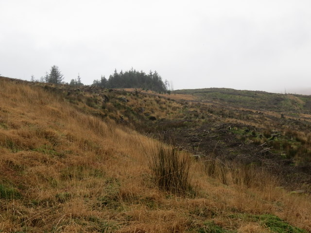 Forest and clearfell area near Cnoc nan Cub