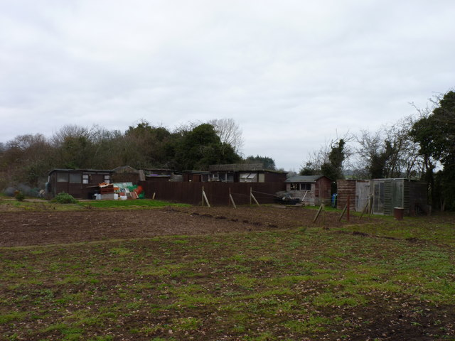 Allotments with pigeons, between Uphampton and Ombersley