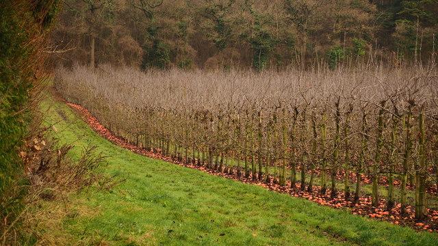 Orchard at Flights Farm