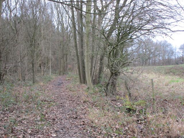 Permissive path in Moreby Far Wood