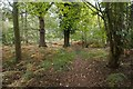 TL9492 : Autumn in Thetford Forest by David Pashley