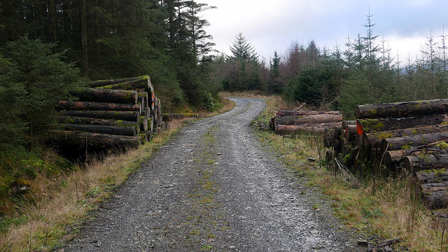 Logs beside the forestry road in Cwm Camlan