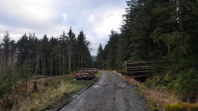 Forestry road in Cwm Camlan