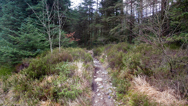 A right of way footpath crossing a forestry road in Cwm Camlan