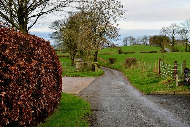 Copper beech hedge along Shinnagh Road