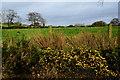 H5672 : Whins in blossom, Mullaghslin Glebe by Kenneth  Allen