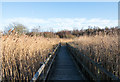 NZ1631 : Boardwalk in reedbed by Trevor Littlewood