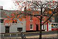 SX7960 : Cherry leaves, Rotherfold, Totnes by Derek Harper