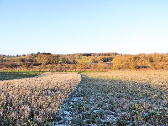 Stubble in field alongside unharvested crop