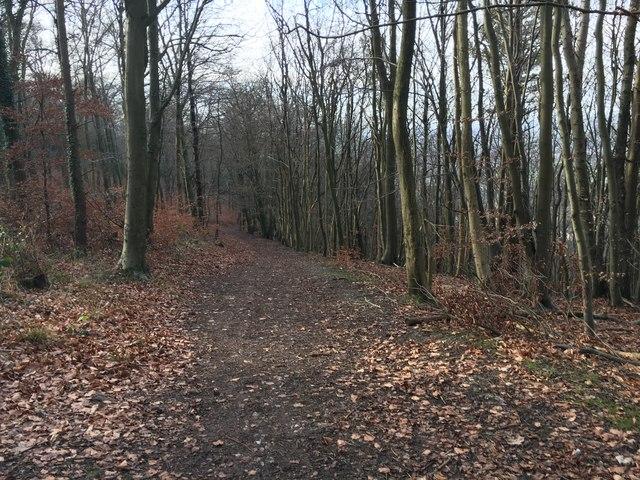 Path to Beechwood Lane